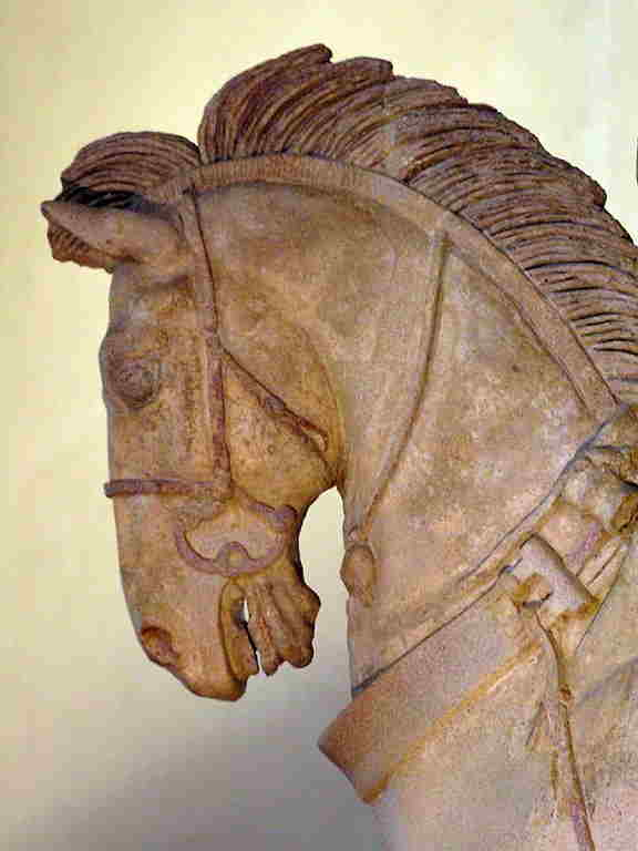 foto animali temi arte 031 etruscox