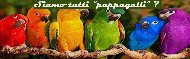 imitazione, siamo tutti pappagalli