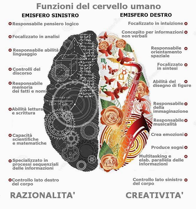 funzioni del cervello umano
