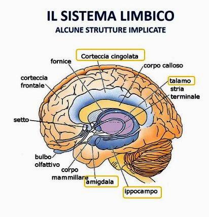 sistema limbico istinto