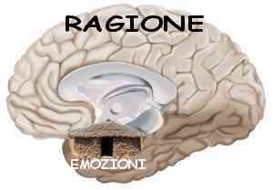 cervello e capanna primitiva