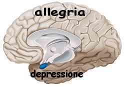 Istinto e ragione amigdala e neocorteccia 001
