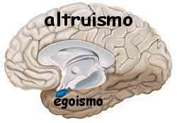 Istinto e ragione amigdala e neocorteccia 002