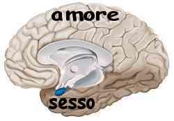 Istinto e ragione amigdala e neocorteccia 003