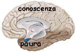 Istinto e ragione amigdala e neocorteccia 005