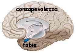 Istinto e ragione amigdala e neocorteccia 007