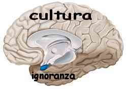Istinto e ragione amigdala e neocorteccia 008