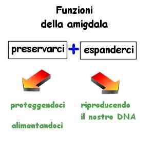 amigdala funzioni