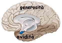 Istinto e ragione amigdala e neocorteccia 010