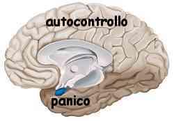 Istinto e ragione amigdala e neocorteccia 011
