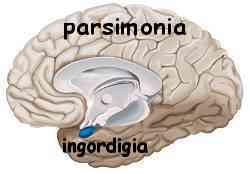 Istinto e ragione amigdala e neocorteccia 013