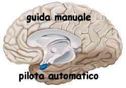 Istinto e ragione amigdala e neocorteccia 022