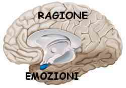 Istinto e ragione amigdala e neocorteccia 014