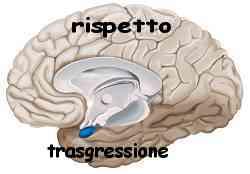 Istinto e ragione amigdala e neocorteccia 015