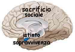 Istinto e ragione amigdala e neocorteccia 016
