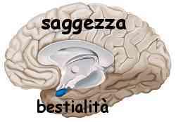 Istinto e ragione amigdala e neocorteccia 023