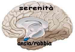Istinto e ragione amigdala e neocorteccia 017