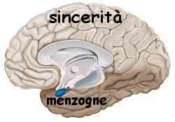 Istinto e ragione amigdala e neocorteccia 018