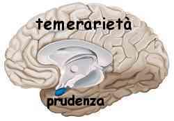 Istinto e ragione amigdala e neocorteccia 019