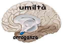 Istinto e ragione amigdala e neocorteccia 020