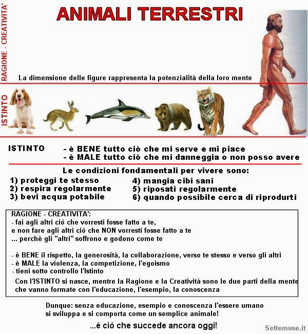 animali terrestri