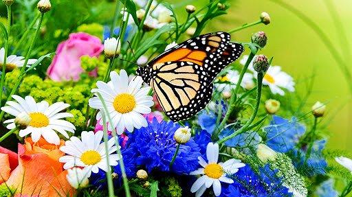 la bellezza nella natura