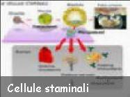 Commento sulle cellule staminali