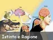 Tema sulla amigdala, istinto e ragione