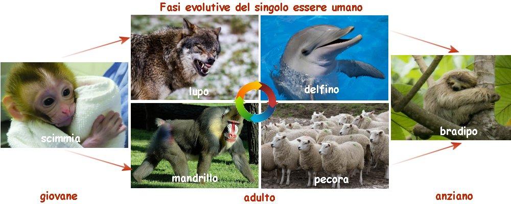 fasi della vita paragonate ad animali