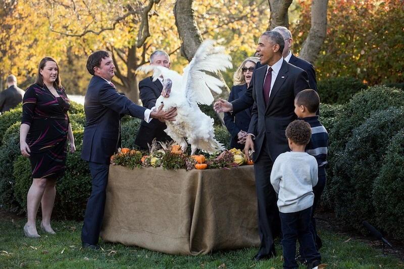 Tacchini nel giorno del ringraziamento alla casa bianca