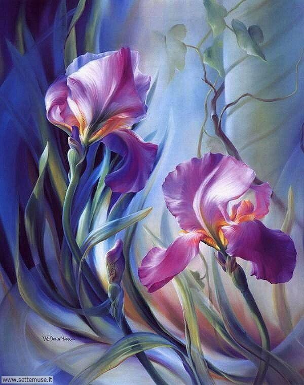 vasi di fiori Vie Dunn Harr