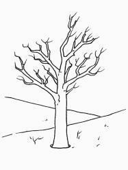 Colora alberi