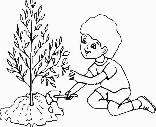 colorare/disegni_alberi_008.jpg