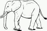 Disegni da colorare: elefanti