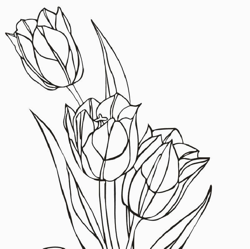 Disegni fiori a matita ir93 regardsdefemmes for Fiori grandi da colorare