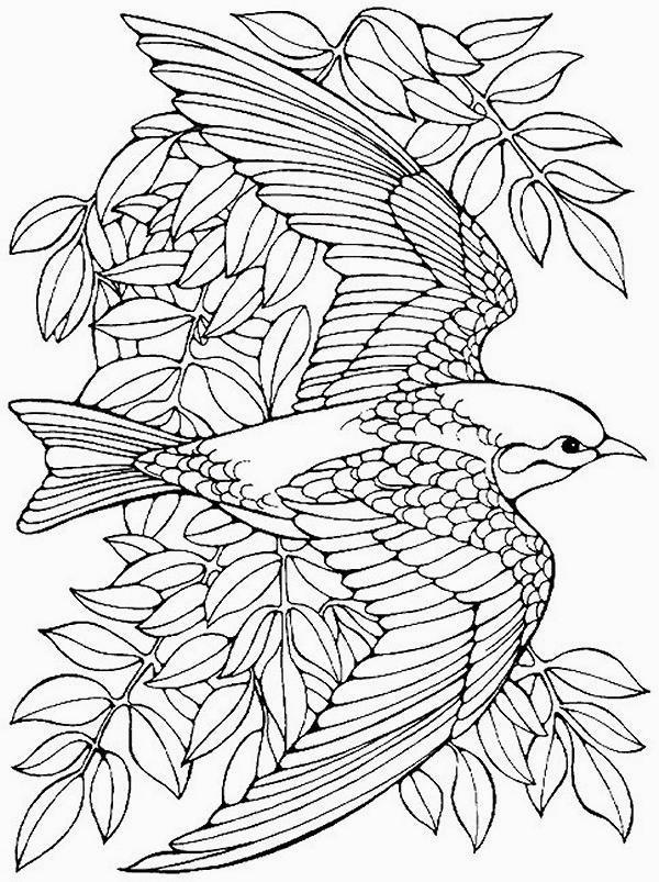 colorare/disegni_uccelli_002.jpg