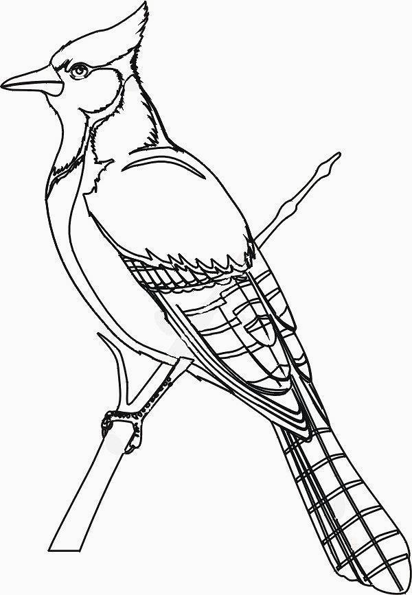 colorare/disegni_uccelli_003.jpg