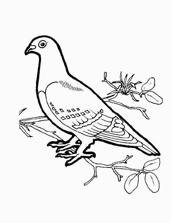 colorare/disegni_uccelli_004.jpg