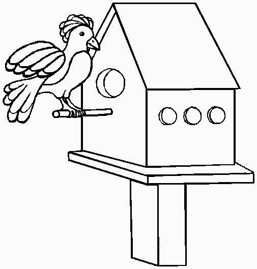 uccellino sul nido