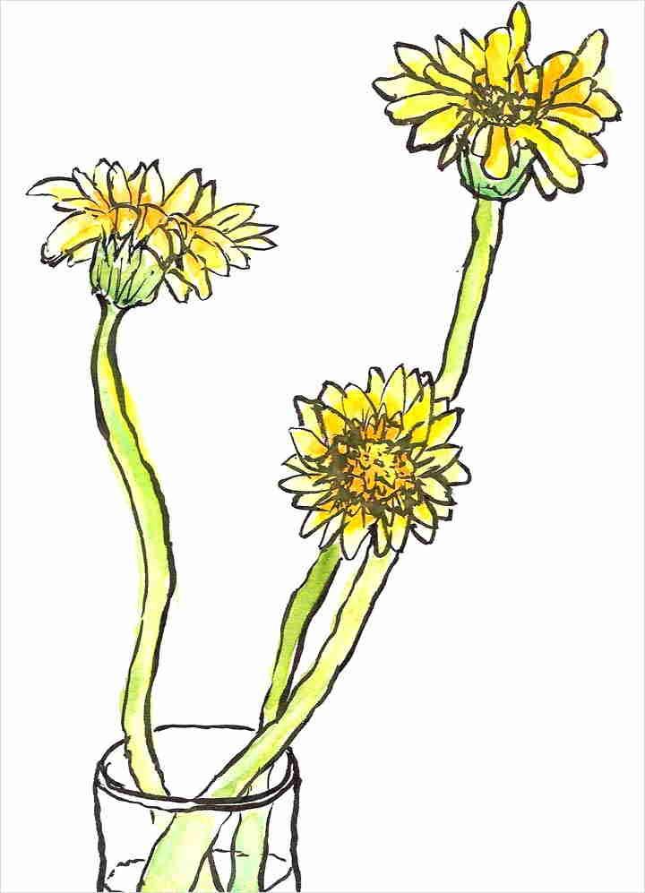Corso di disegno per principianti l 39 acquarello for Fiori facili da disegnare