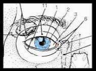 Pag. 3 Disegnare gli occhi