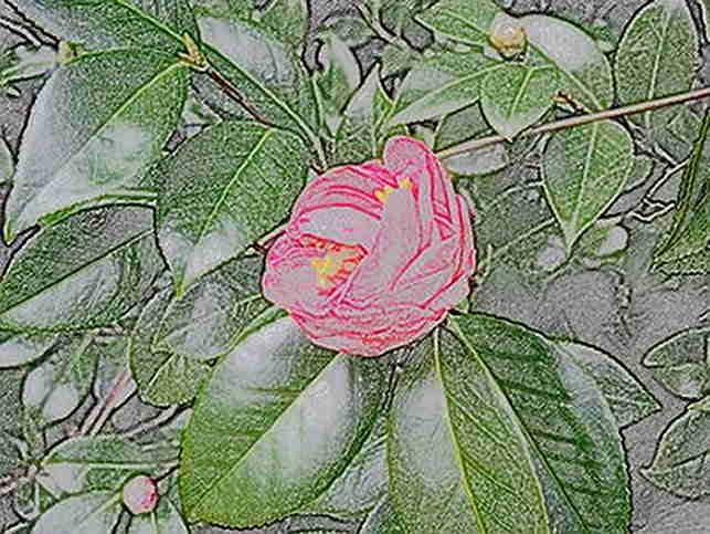 Fiore e foglie fatte con matite colorate su carta liscia