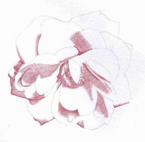foto_disegno/rosa_02.jpg