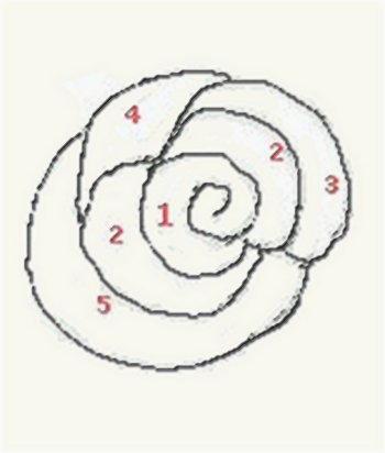 Corso di disegno per principianti disegnare rosa for Immagini da disegnare a matita facili