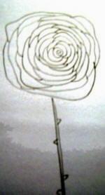 disegnare una rosa a spirale
