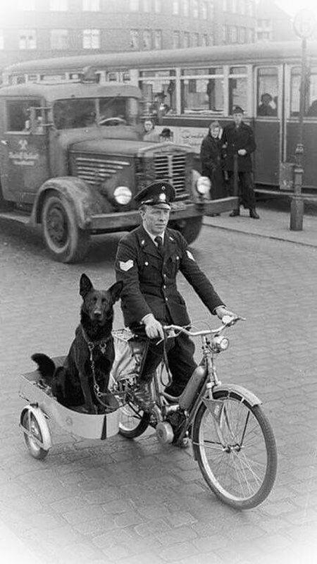 poliziotto con cane
