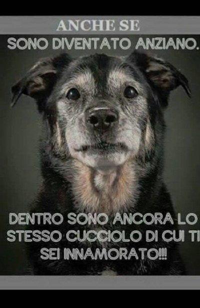 Popolare VIGNETTE DIVERTENTI SUGLI ANIMALI | Settemuse.it SD75