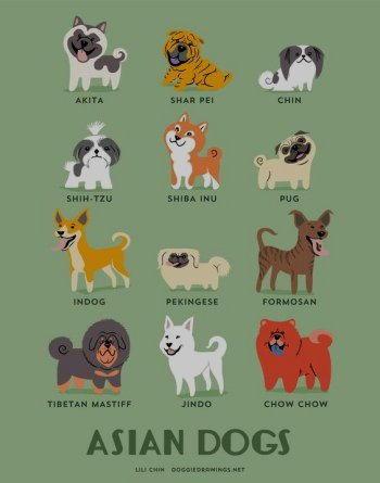 Cani asiatici