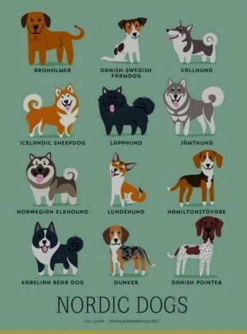 cani nordici