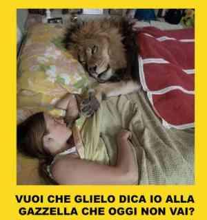Vignetta gazzella e leone